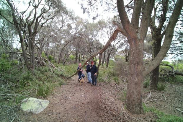Skeleton Bay walk